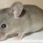 Giải mã các bí ẩn giấc mơ thấy hình ảnh chú chuột