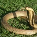 Giải mã các bí ẩn giấc mơ thấy hình ảnh chú rắn