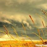 Giải mã các bí ẩn giấc mơ thấy gió mát dịu nhẹ